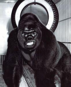 Image result for gargantua gorilla