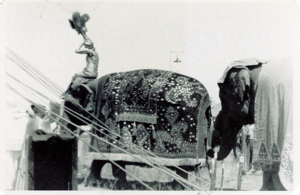 elephant-spec