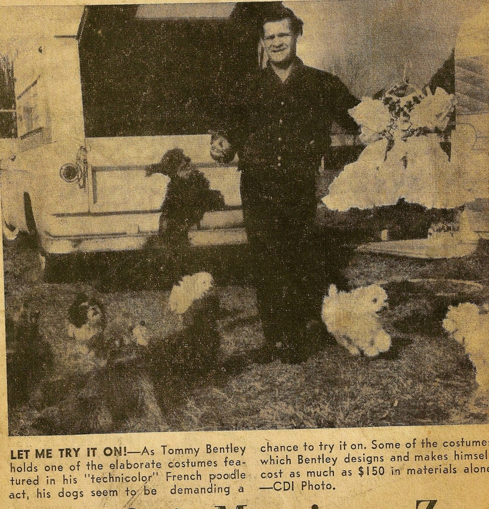 Tommys Dog act ad 984x1024 Corona Daily Independent