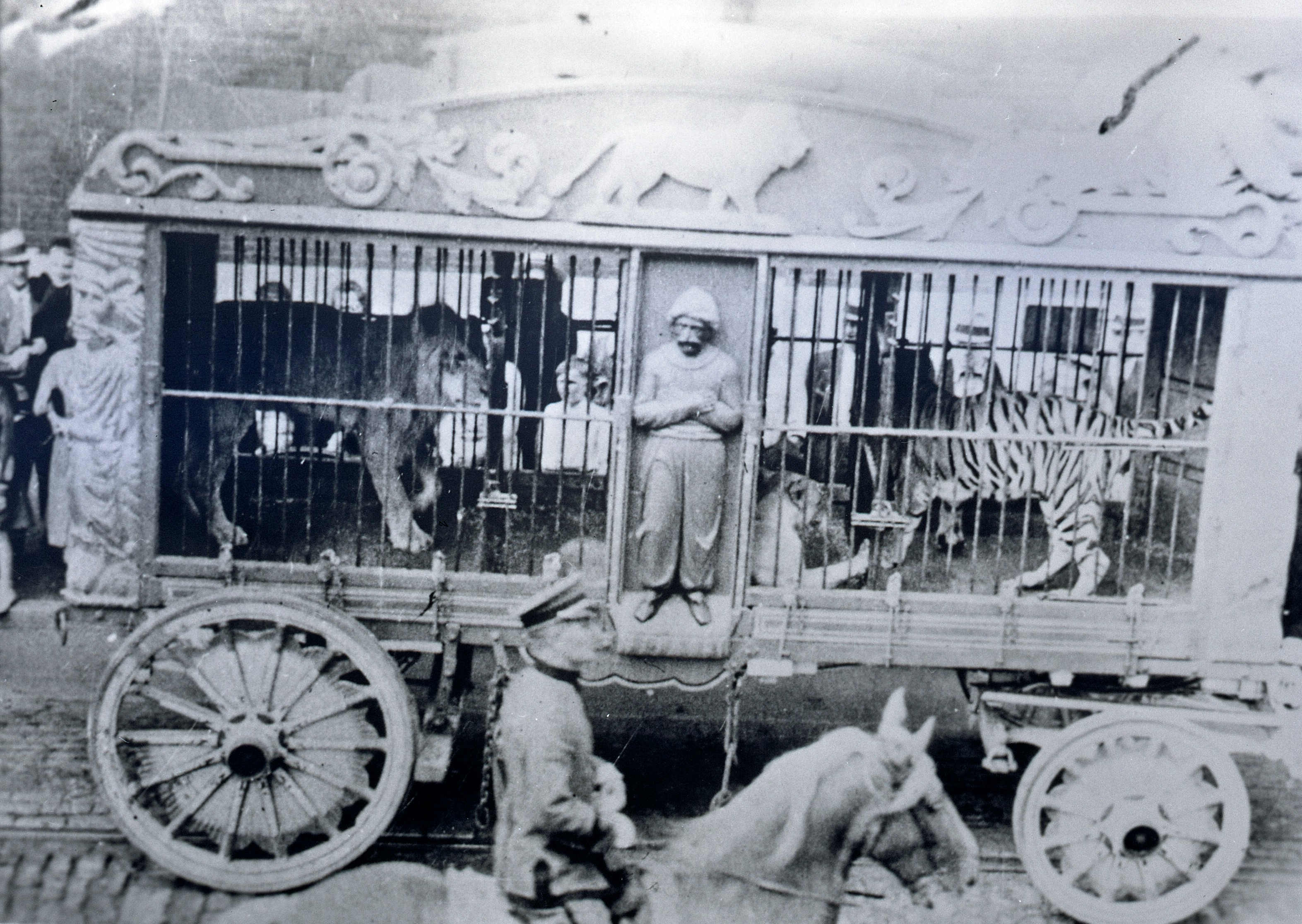 Ringling-Bros-1908-ParadeTigers-in-cage-