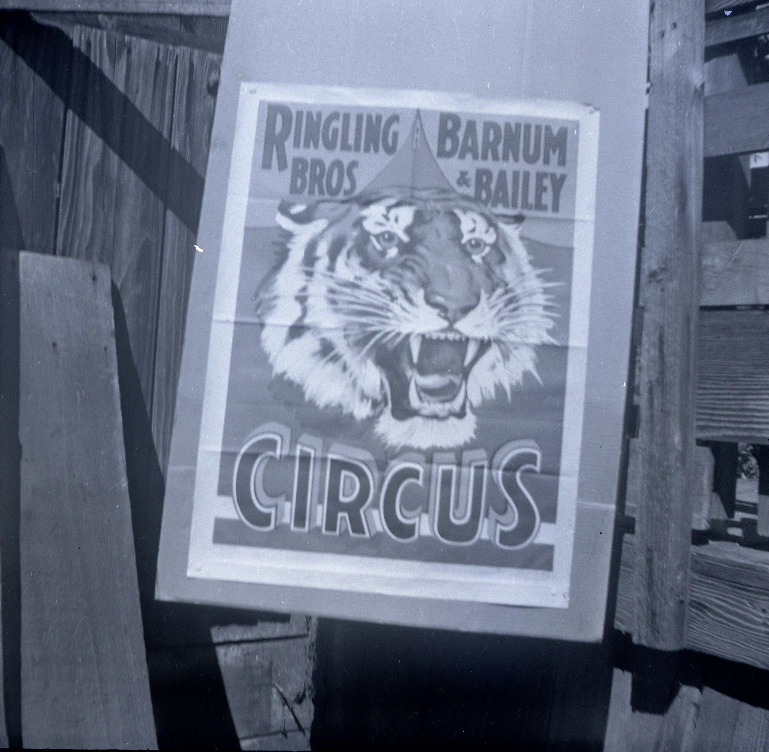 Ringling Bros  Barnum and Bailey  Tiger  Poster 2 neg Dup Posted 1 of 13