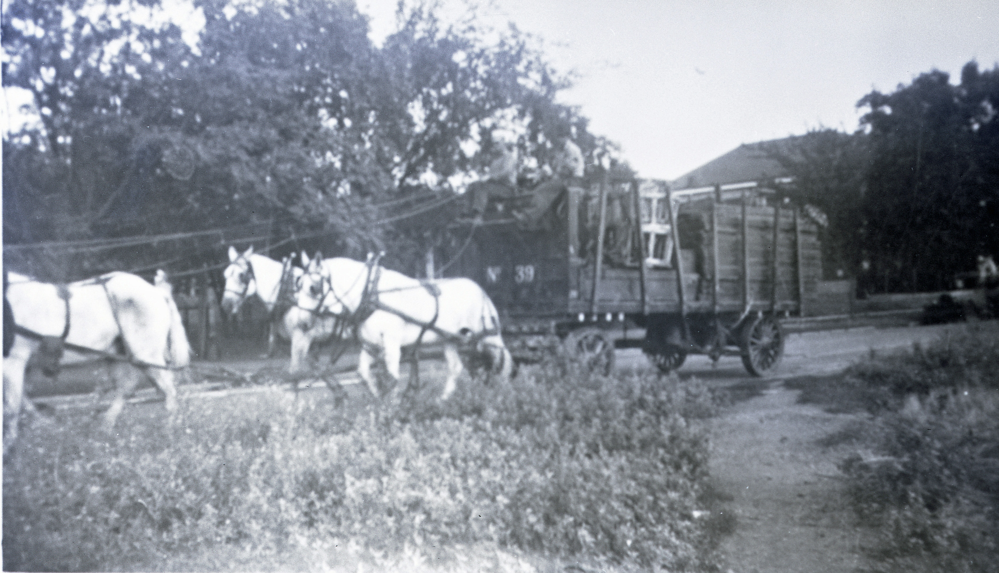 Ringling Bros Barnum   Bailey  1934  4 Horse hitch with wagon Posted 2-of 13