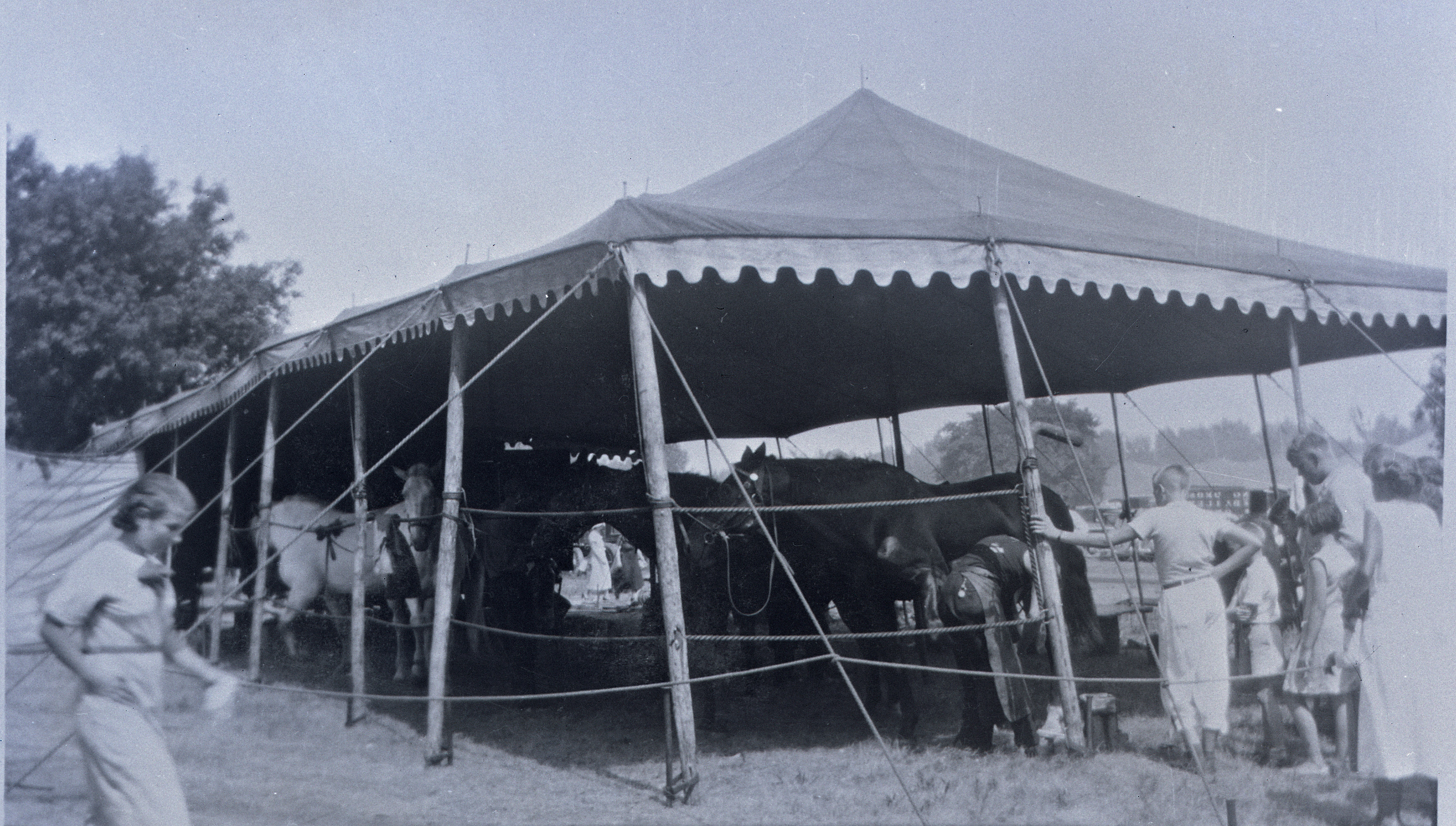 Ringling Bros Barnum   Bailey  1936  Horse top Posted 2-of 13
