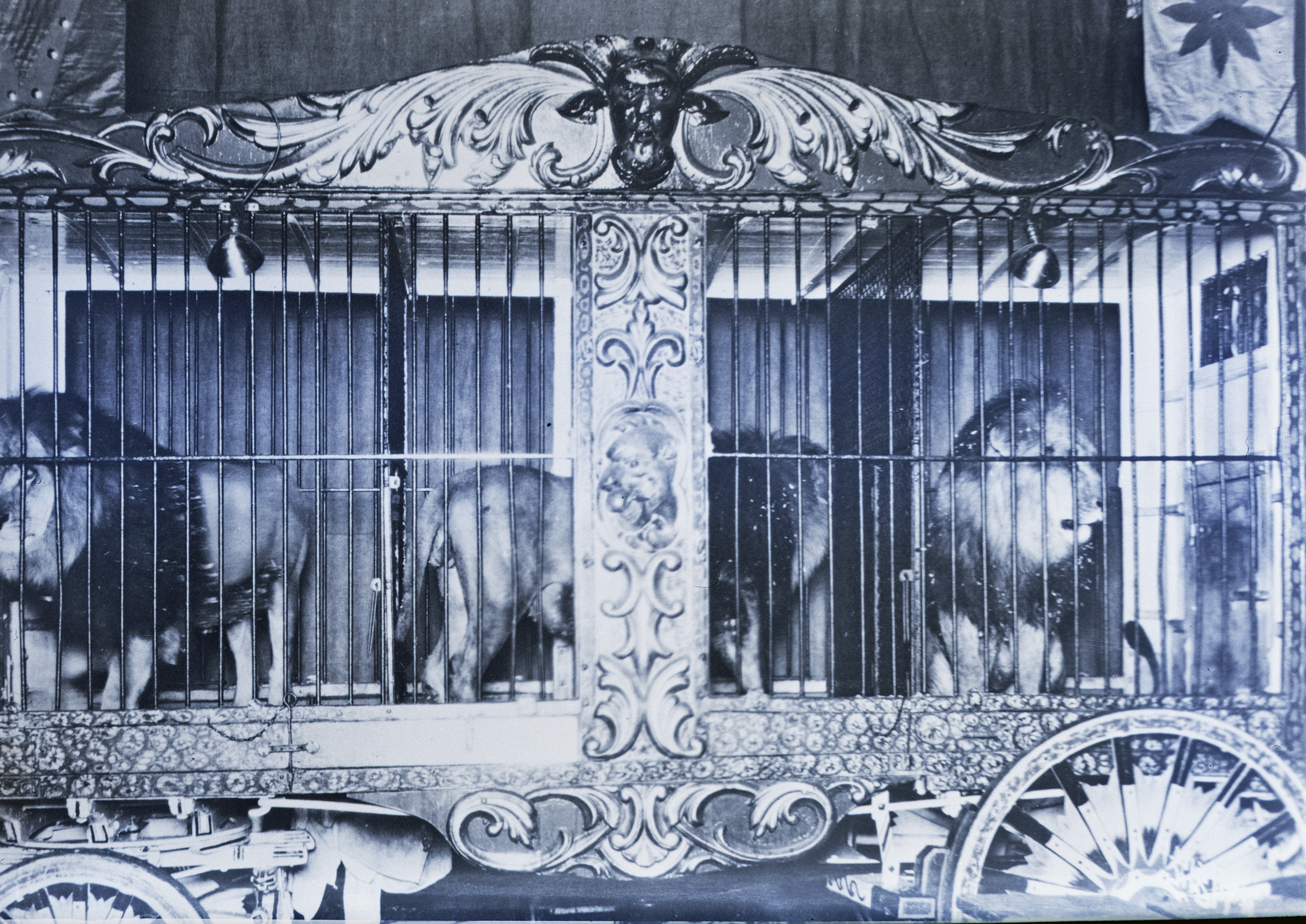 Ringling Bros Barnum   Bailey  1938 Carved Lion Cage Wagon Posted 3 of 13