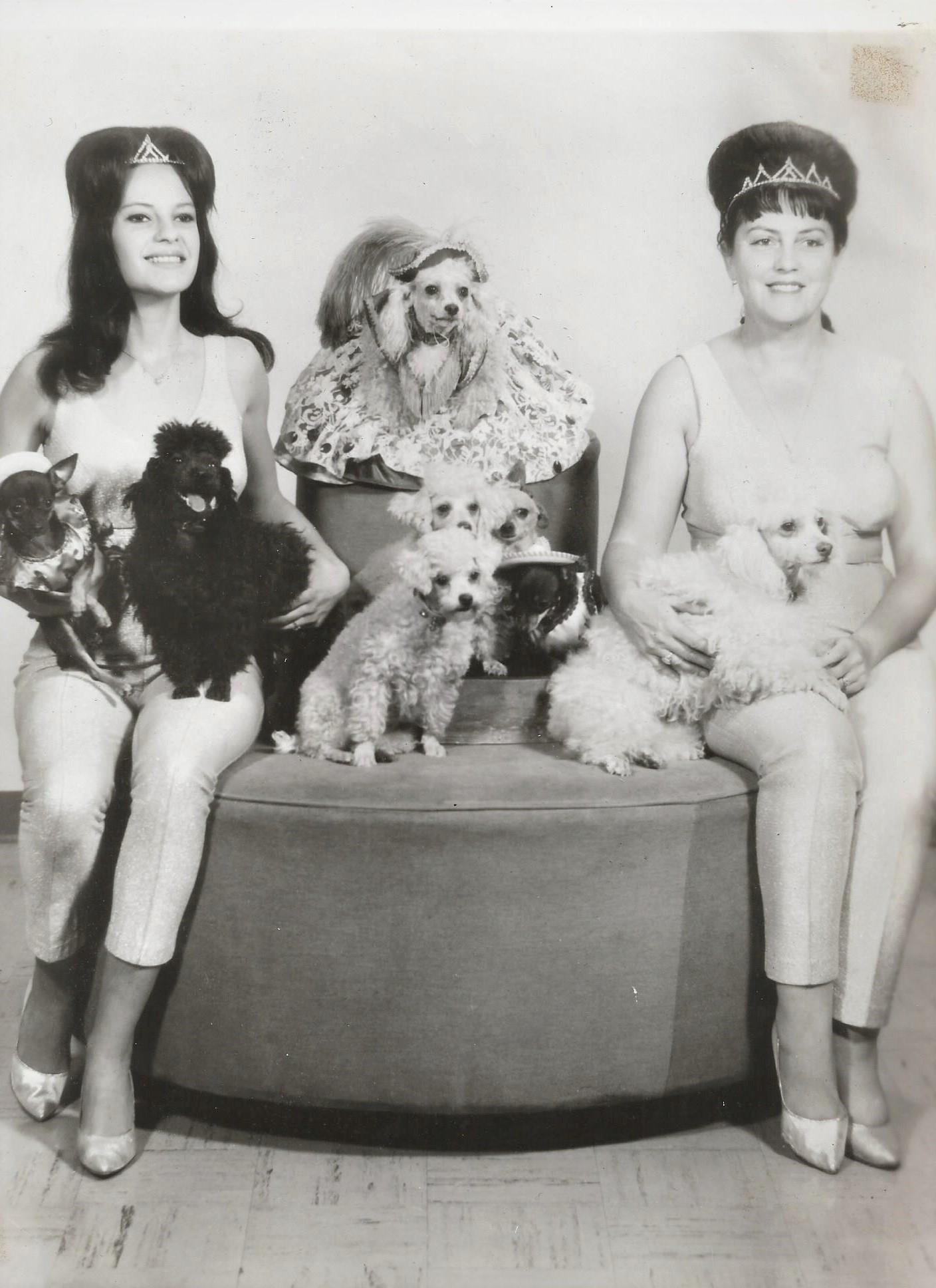 Toni Madison Wonder Dogs