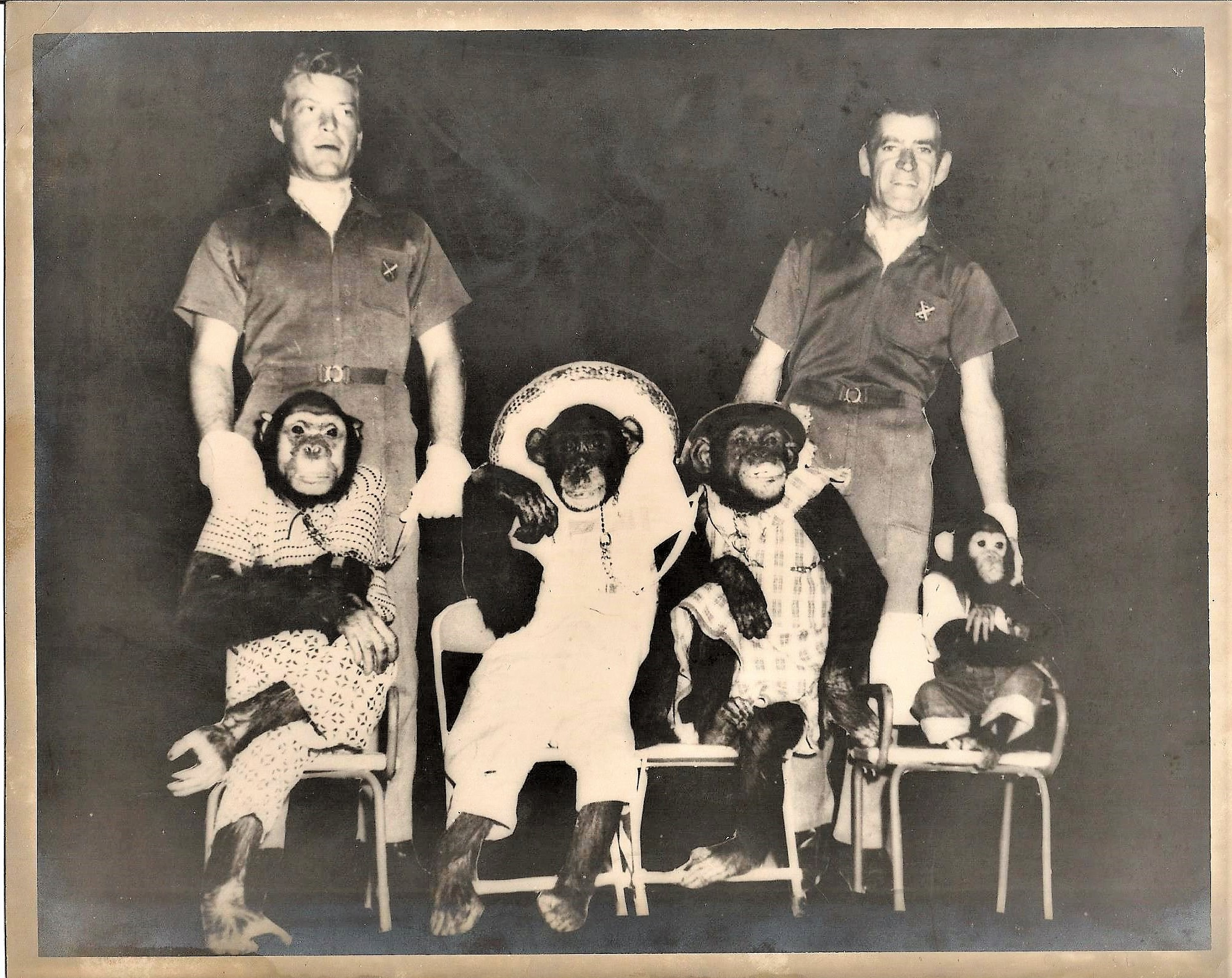 Henry's Chimps