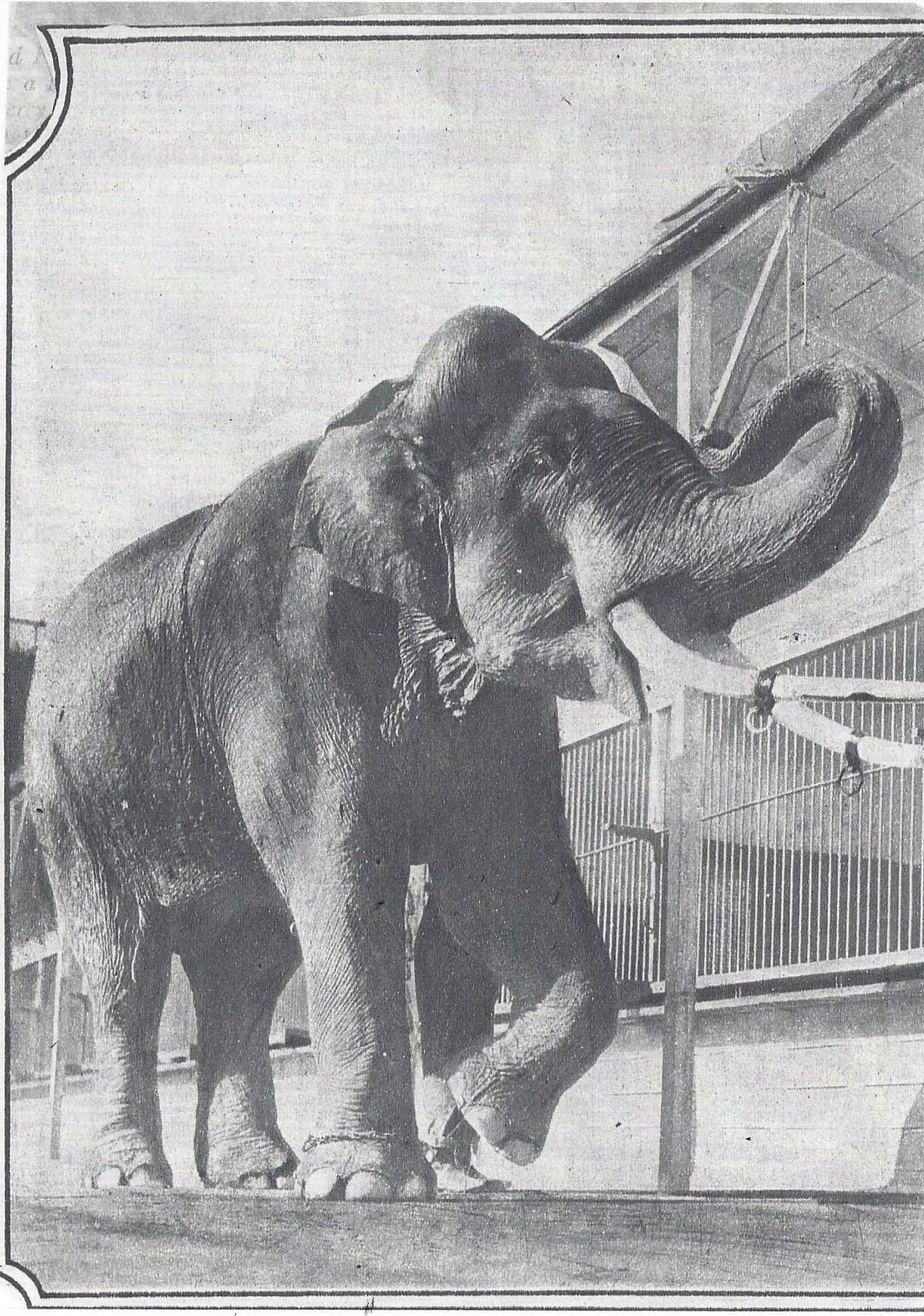 Tusko, Al G. Barnes Circus Mid 1930's