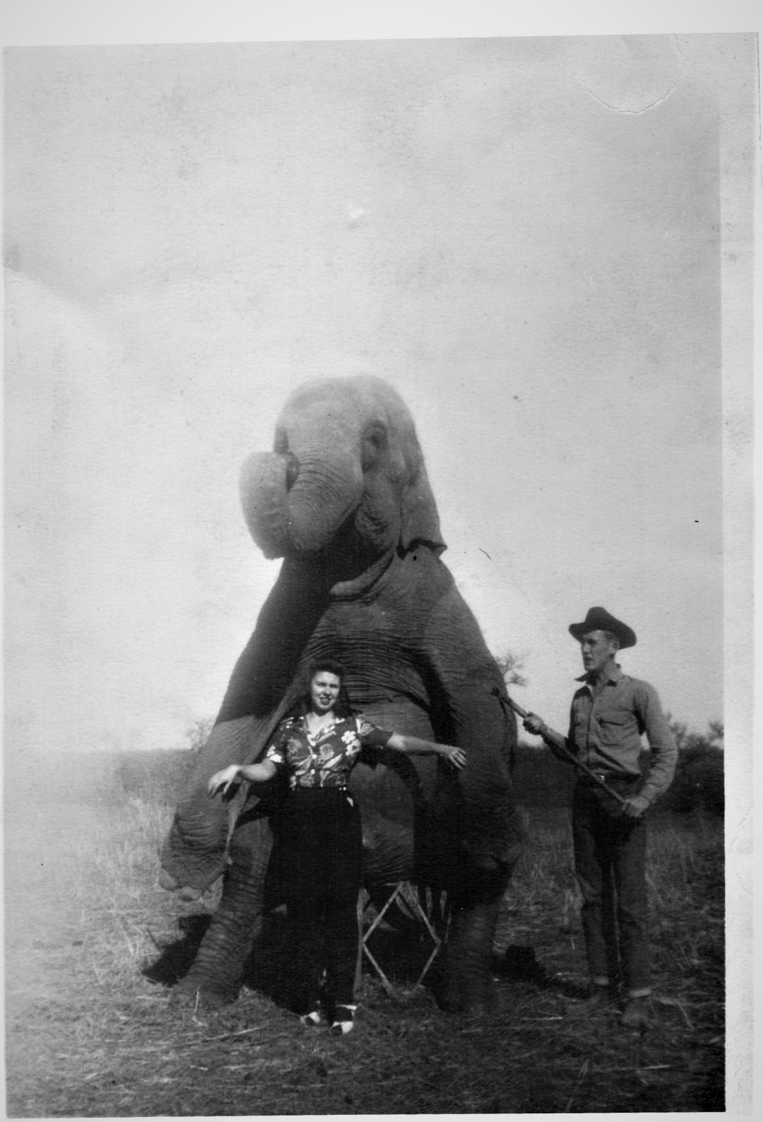 Good Elephant, Bruma